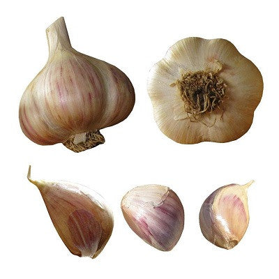 Susan Delafield Garlic - Heirloom Garlic