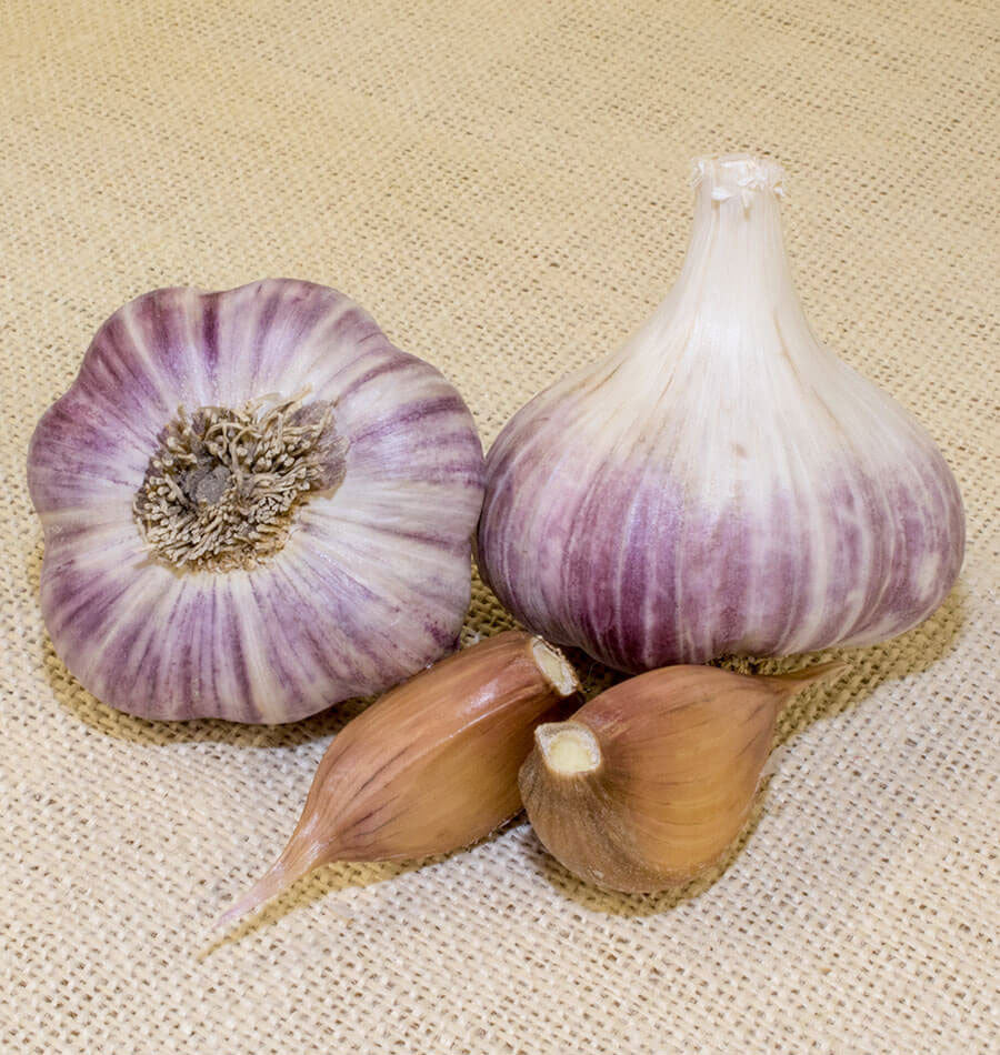 Wengers Red Russian Garlic - Heirloom Garlic