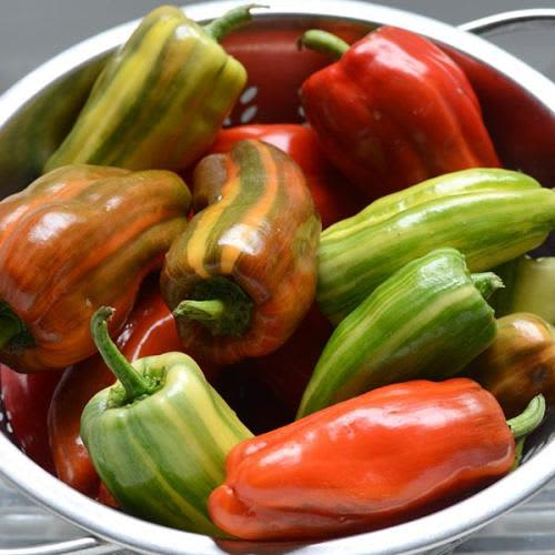 Candy Cane Red Chilli Pepper Capsicum - Patio, container chilli pepper - 5 seeds