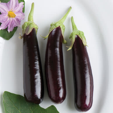 Hansel Eggfruit / Brinjal -  Patio, container brinjal / eggplant - 5 seeds