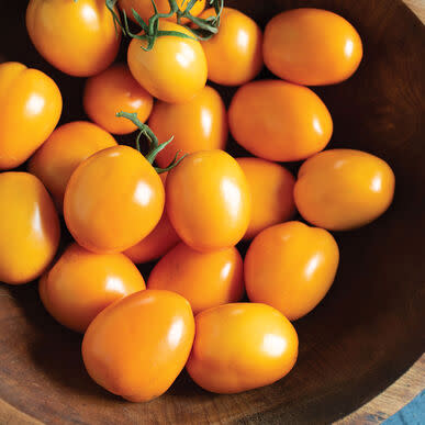 Tomato Sunrise Sauce - Patio, container orange roma style tomato - 5 seeds