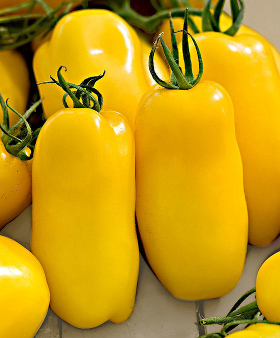 Banana Legs Heirloom Tomato - Lycopersicon Esculentum - Vegetables - 20 Seeds