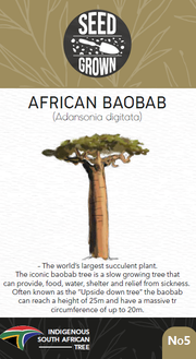 Seed Grown Kit No.5 - African Baobab - Adansonia digitata - Complete Tree Growing Kit