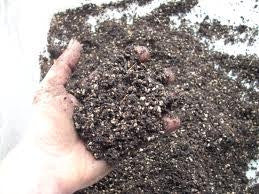 Specially Formulated Bonsai Soil