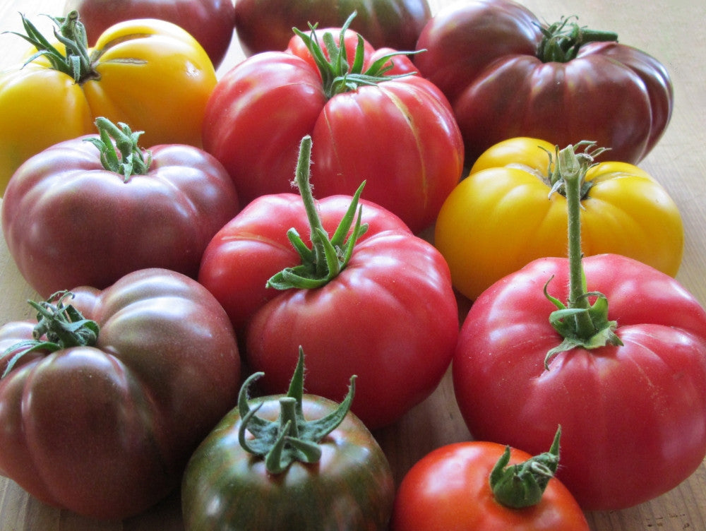 Tomato Collectors Pack - 12 Varieties - 220 Fresh Seeds - Incl Heirloom, Open Pollinated & Organic