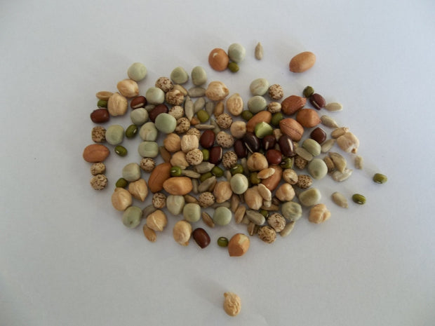 Chunky Salad Mix - Sprouting Seeds
