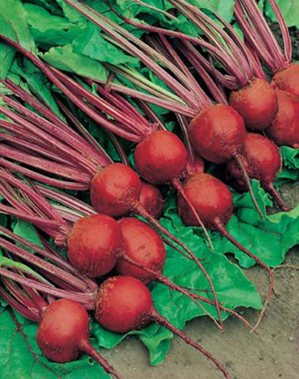 Crimson Globe Beetroot - Bulk Vegetable Seeds - 200 grams