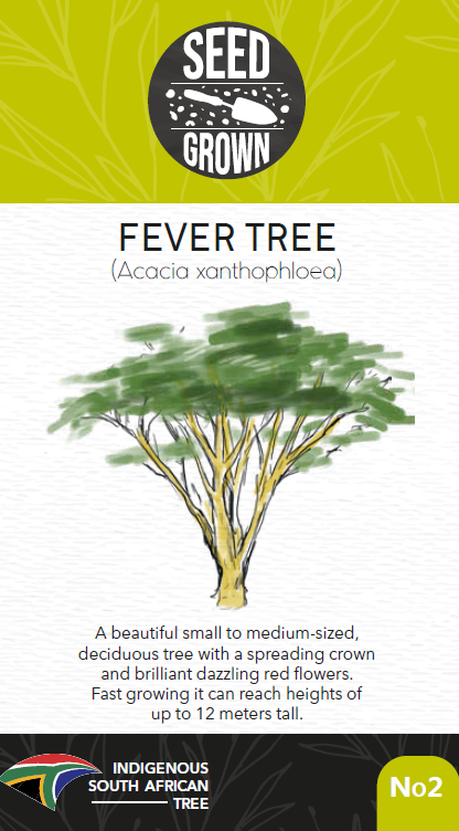 Seed Grown Kit No.2 - Fever Tree - Acacia xanthophloea - Complete Tree Growing Kit