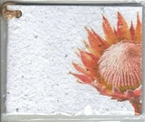 Growing Paper - Single Gift Tag - King Protea