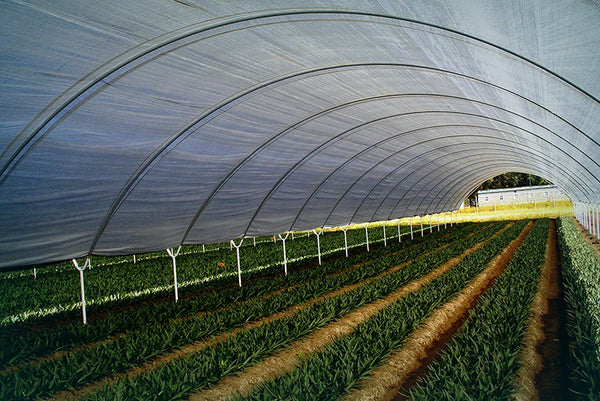 greenhouse film plastic commercial grade 200 micron seeds for