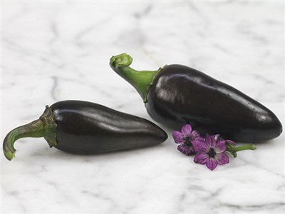 Hungarian Black Chilli Pepper - Capsicum Annuum - Chilli Pepper - 20 Seeds