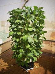 Hydroponic NFT Tower System - 72 Pocket / 72 Plants - Hydroponic System