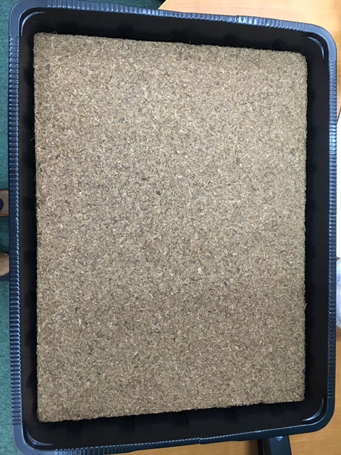 Jiffy Professional Peat plate for Microgreen Tray 39cm x 29cm x 2cm Approx 500 gram (excludes tray)
