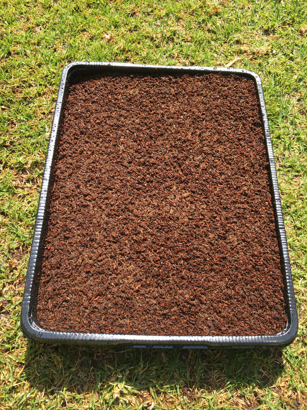Jiffy Professional Microgreen Tray with Jiffy Peat plate - 44cm x 33cm x 6cm