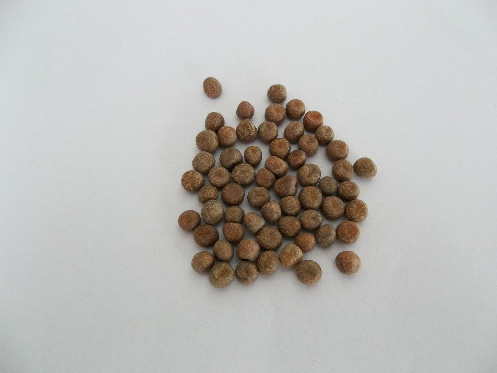 Maple Peas - Sprouting Seeds
