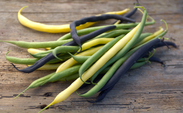Runner Beans - Mardi Gras Blend - Phaseolus - Heirloom Vegetable - 10 Seeds