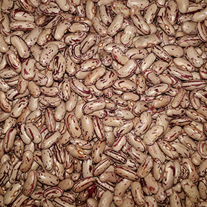 Oribi Hybrid Dry Sugar Beans - Bulk Vegetable Seeds