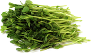 Green Peas - Sprouting / Microgreen Seeds