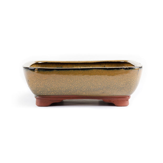 21cm x 15cm x 7cm - Glazed Bonsai Container - Mustard