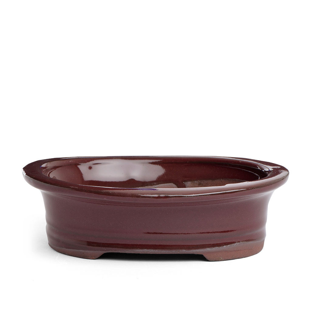 15cm x 12cm x 4.5cm Glazed Bonsai Container - Oxblood