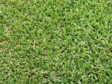 Shade Mix Lawn / Grass Seed