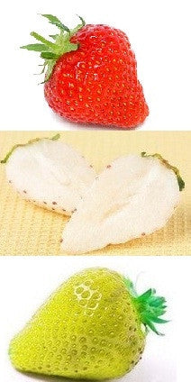 Kaleidoscopic - Red, Yellow & White Strawberry - Fragaria Varieties - 15 Seeds - RARE