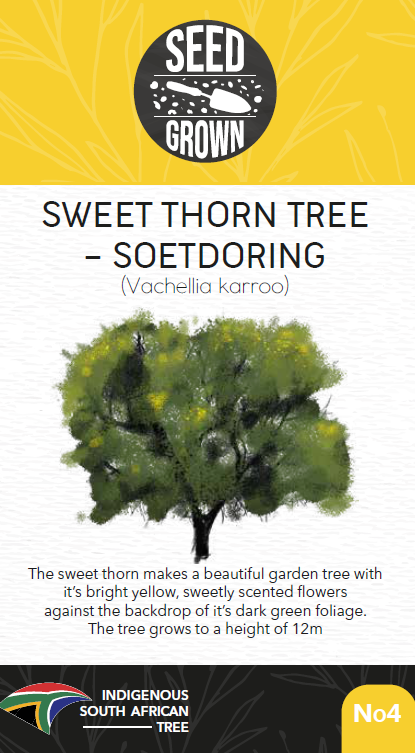 Seed Grown Kit No.4 - Sweet Thorn Tree - Soetdoring - Vachellia karroo - Complete Tree Growing Kit