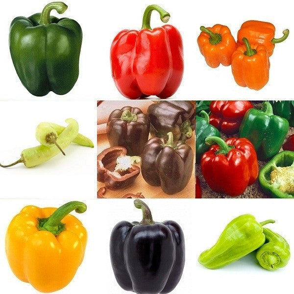 Sweet Pepper Rainbow Seeds - 9 Varieties