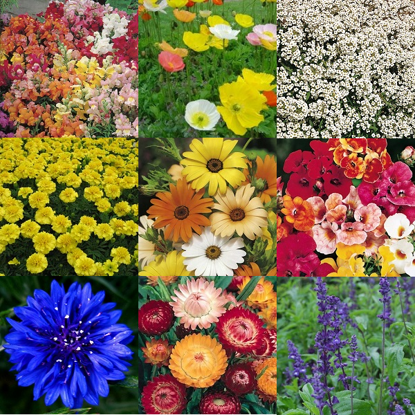 """Summer Time"" Flower Seeds - 10 Seed Packs - Summer Specials - PK1"