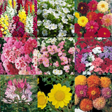 'Summer Shades' Flower Seeds - 10 Seed Packs - Summer Specials - PK5