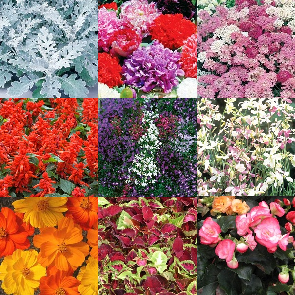 """Summer Colours"" Flower Seeds - 10 Seed Packs - Summer Specials - PK6"