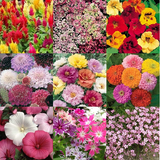 'Summer Blooms' Flower Seeds - 10 Seed Packs - Summer Specials - PK7