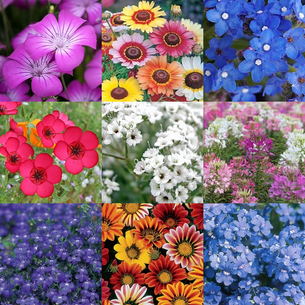 'Bright Summer' Flower Seeds - 10 Seed Packs - Summer Specials - PK8