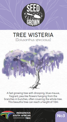 Seed Grown Kit No.3 - Tree Wisteria - Bolusanthus speciosus - Complete Tree Growing Kit
