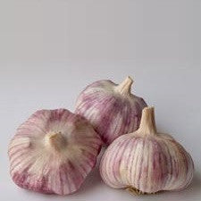 Tuscan Garlic - Heirloom Garlic