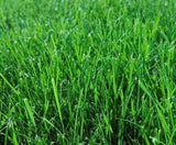 Evergreen Mix Lawn / Grass Seed