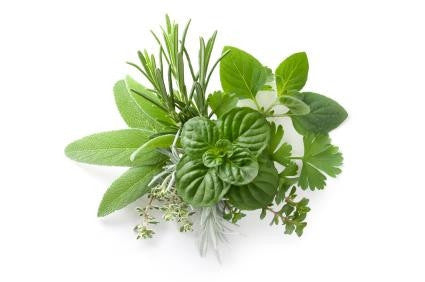 Wedding Favour Seeds - Mixed Herb Seeds