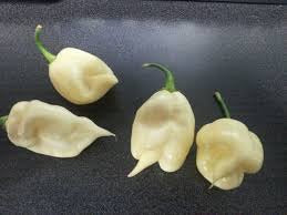White Trinidad 7 Pod Chilli Pepper - Capsicum Chinense - 5 Seeds