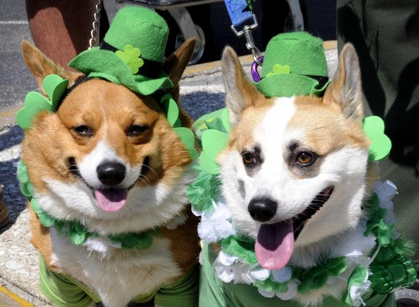 5 Places to Celebrate St. Patrick's Day