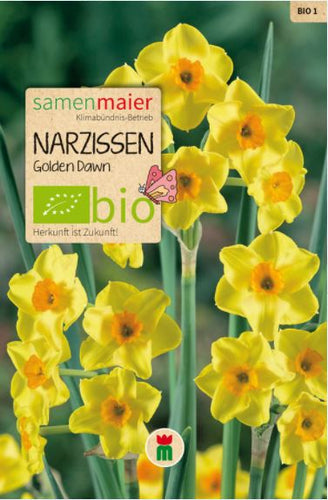 Narzissen Golden Dawn - BIO Blumenzwiebel