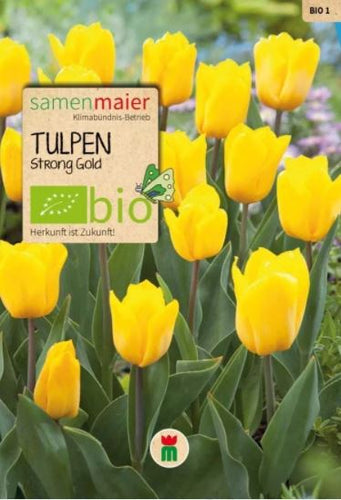 Tulpen Strong gold - BIO Blumenzwiebel