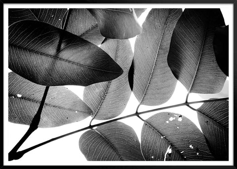 Branches and leaves 3