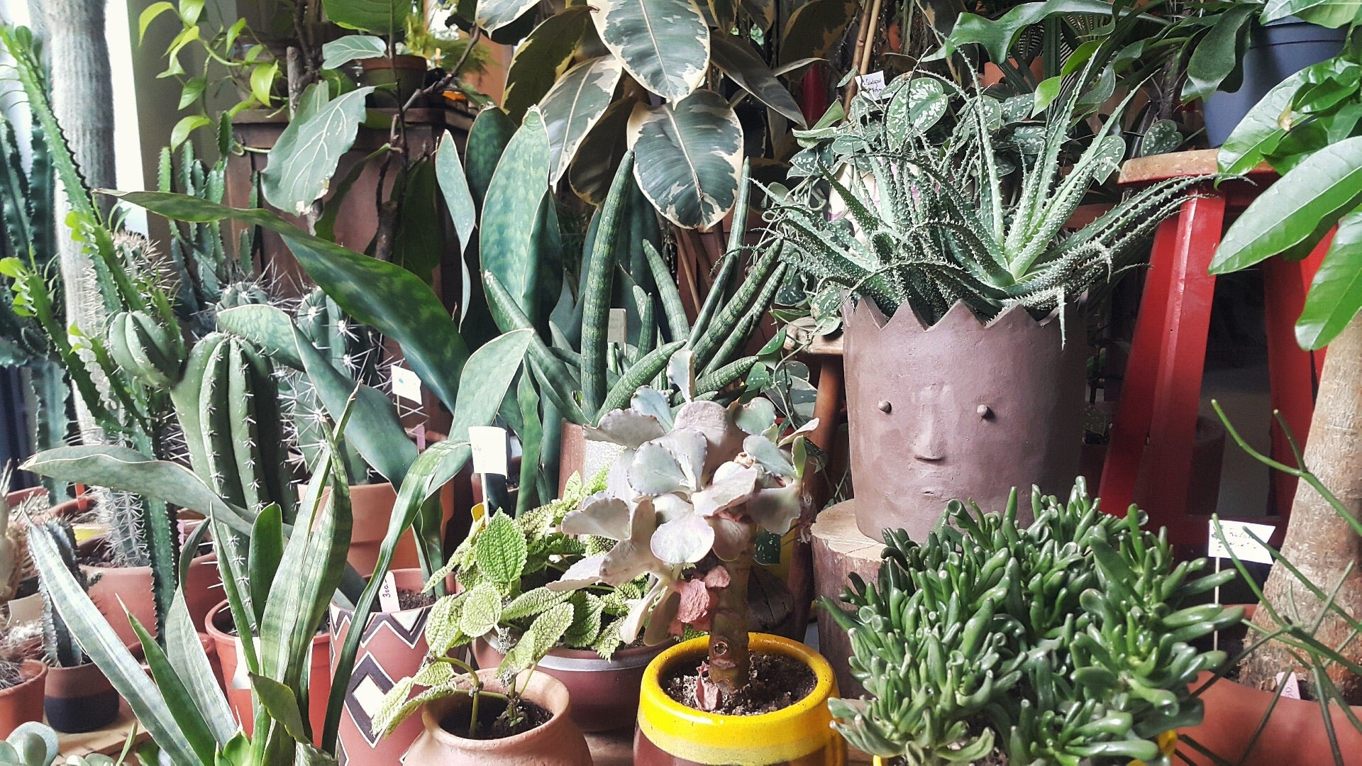 wohha ceramics x labofem plants