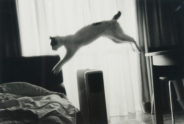 Nobuyoshi Araki-cat_art_contemporary_photography_Japan_erotic_article_Kids of Dada