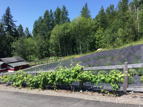 About Us – Misty Valley Farm