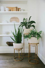 ATELIER LANE | INTERIOR DESIGN HONG KONG | INDOOR PLANTS