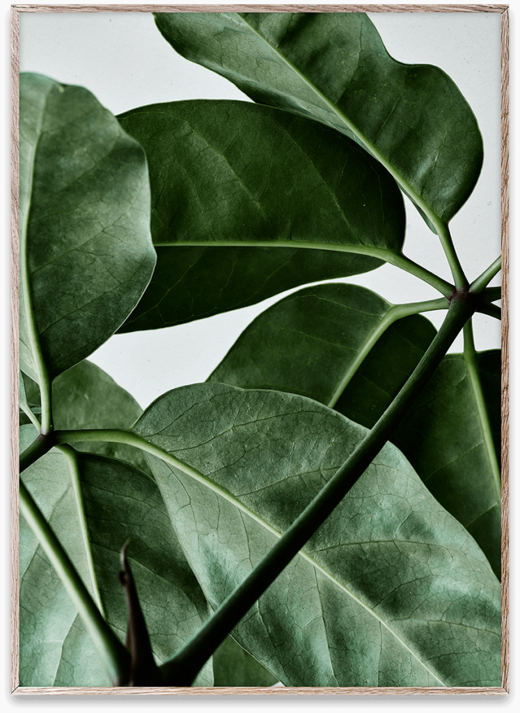 Plant Poster and Frame 50x70cm