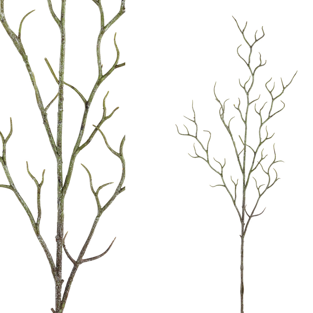 Twig plant grey branch spray