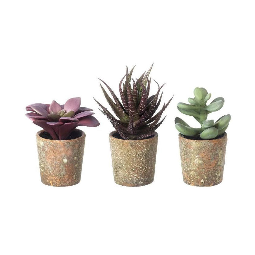 Faux Potted Succulents
