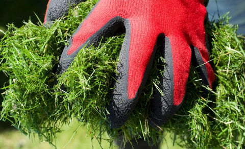 hands wearing red gloves holding fresh grass clippings